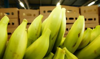 Among other things, the banana ripening plant ripens around 24,000 tonnes of bananas and over 3,000 tonnes of pineapples a year.