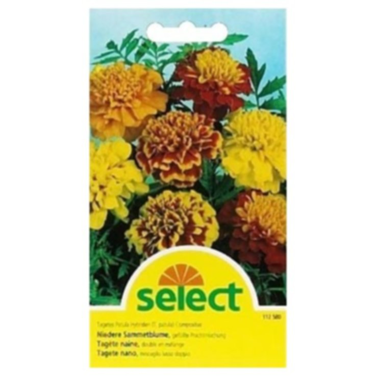 Seeds - Assorted Flower Seeds